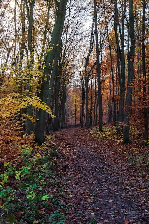 Darmowe zdjęcie z galerii z drogi, jesień, jesienny nastrój, kolor jesieni