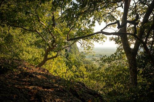 Imagine de stoc gratuită din junglă, junglă mai înaltă, pădure verde