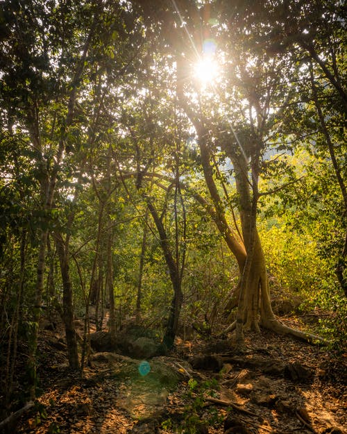 Imagine de stoc gratuită din junglă, pădure verde
