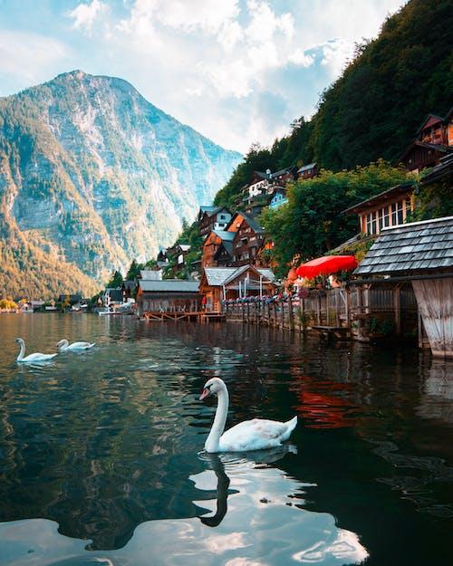강, 경치, 경치가 좋은, 구름의 무료 스톡 사진