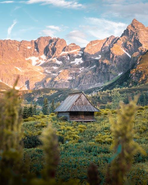 Gratis lagerfoto af bjerg, dagslys, eventyr, falde