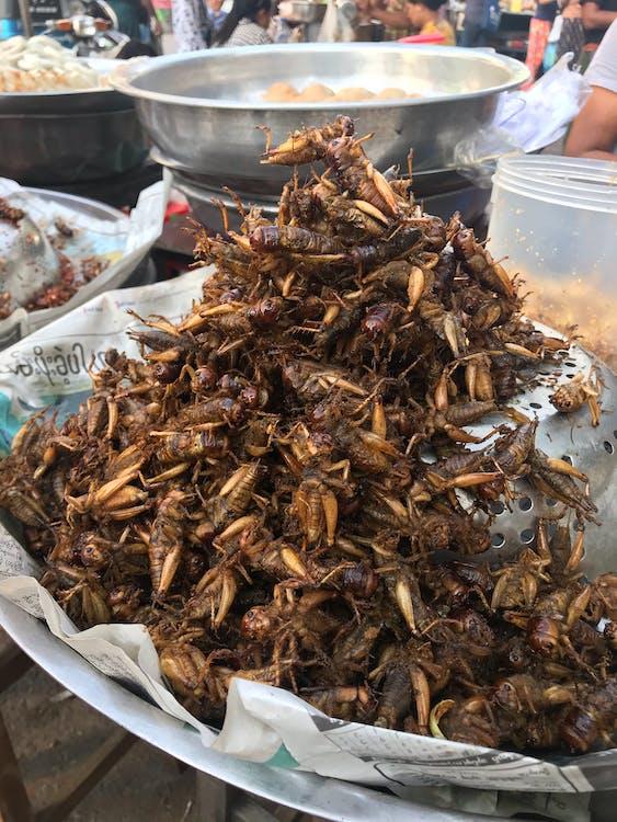 cibo di strada, cibo esotico, cricket