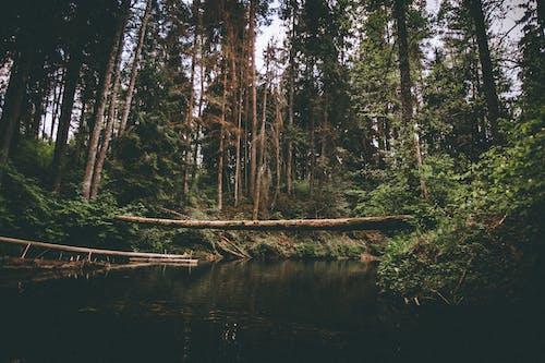 Kostnadsfri bild av flod, höga träd, landsbygden, lantlig