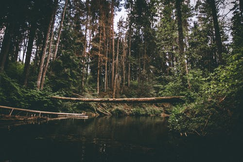 Fotos de stock gratuitas de agua, al aire libre, arboles, árboles altos