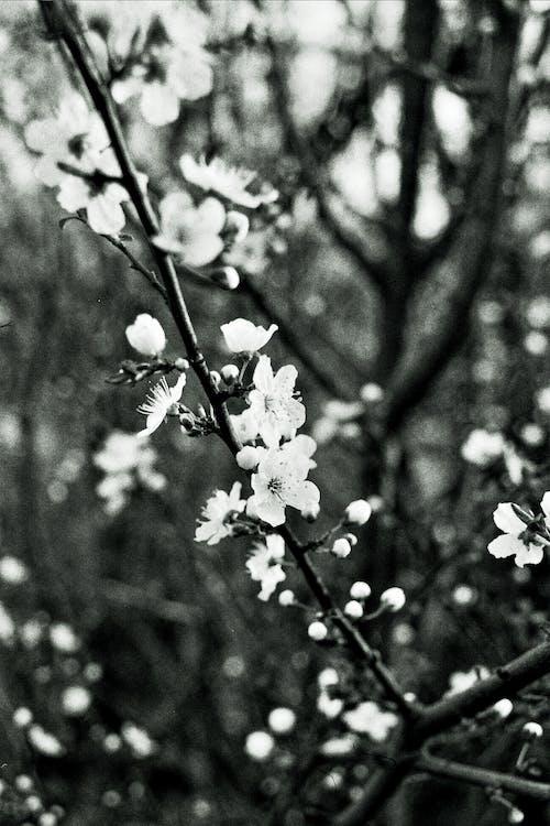 Gratis stockfoto met bloemen, bruisend, concentratie, delicaat