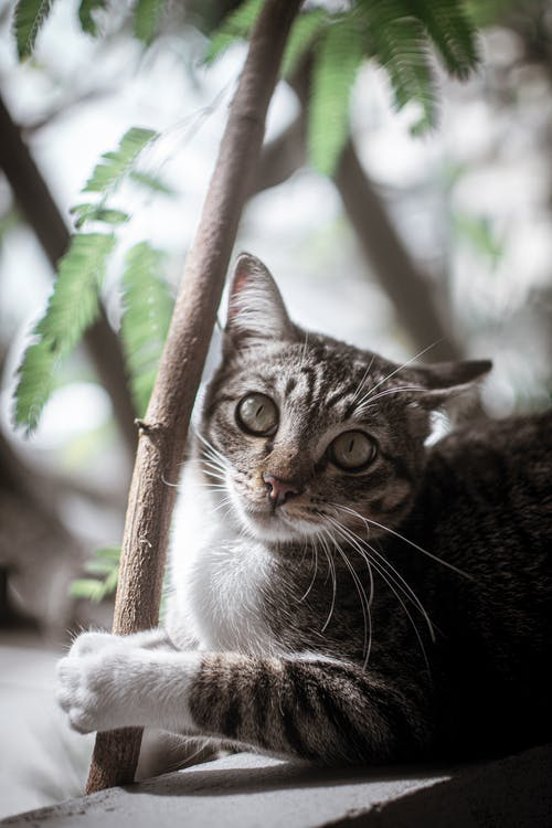 Shallow Focus Photo of Tabby Cat