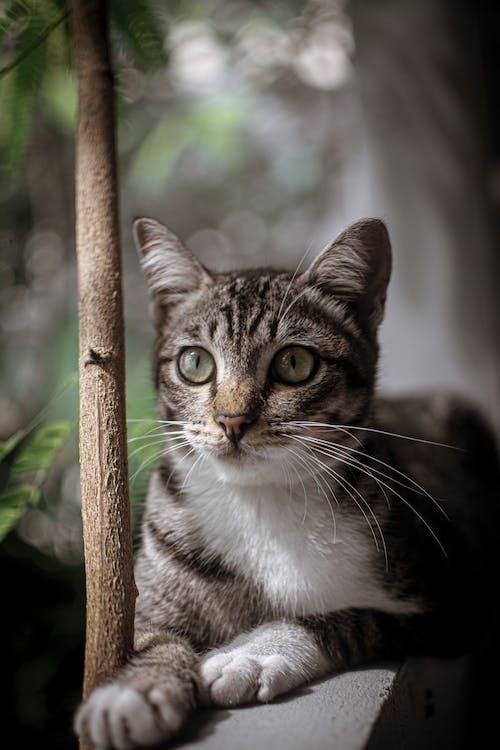 Kostnadsfri bild av bokeh, däggdjur, djur, djurfotografi