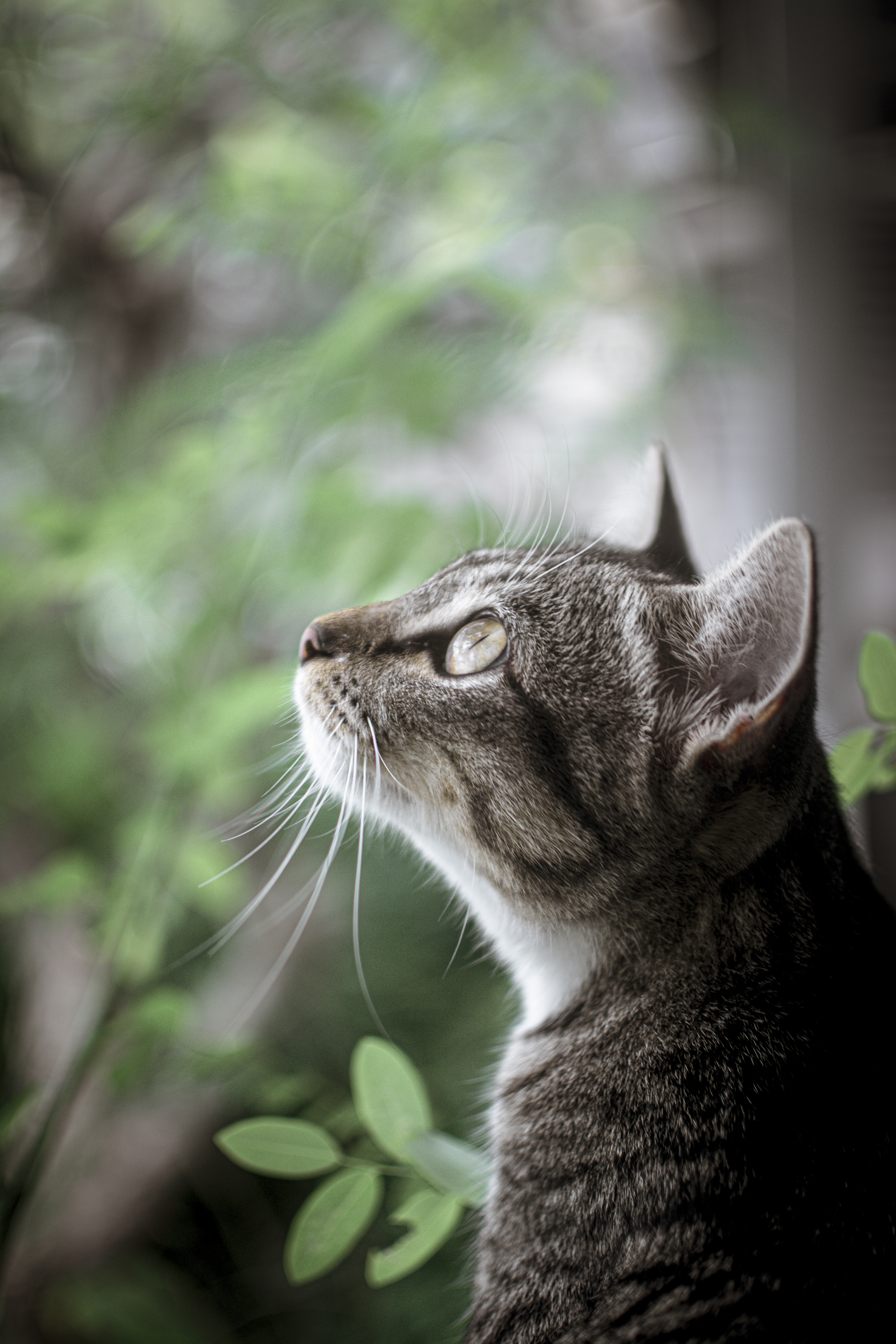 Shallow Focus Photo of Tabby Cat Looking Up