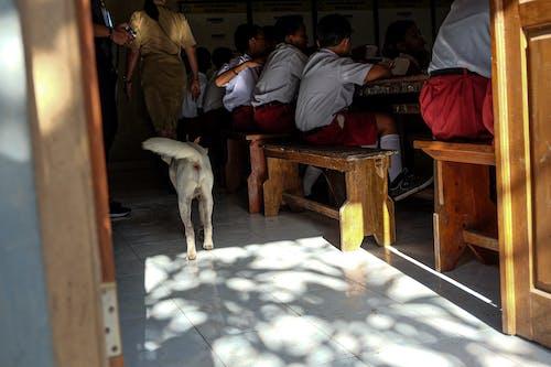 Foto d'estoc gratuïta de cadell, classe, escola primària, estudiant