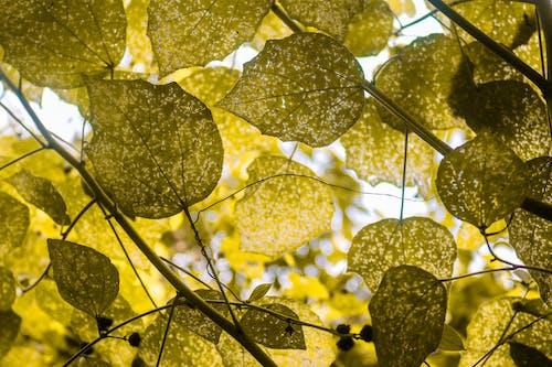 Kostnadsfri bild av gröna löv, löv, natur, skrivbordsunderlägg