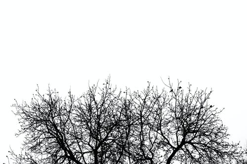 Free stock photo of bare trees, black and white, forest, minimal