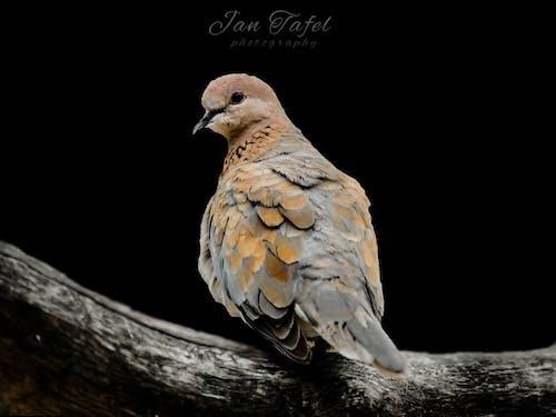 Free stock photo of bird, fashion photography, nature