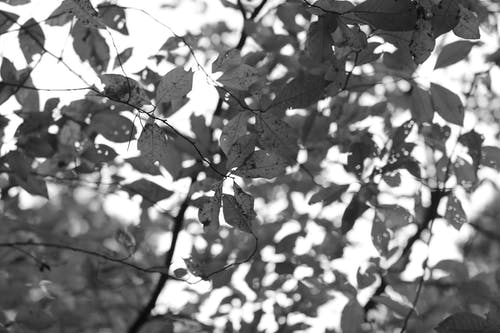 Gratis lagerfoto af grene, natur, sort og hvid