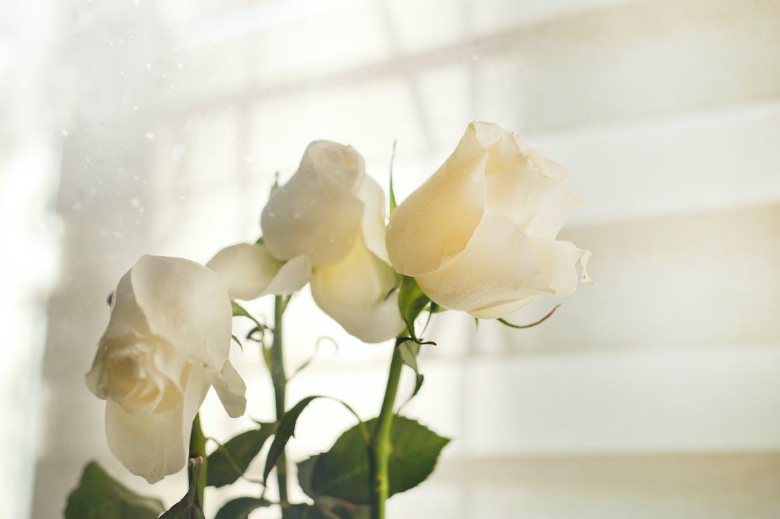 biela, čerstvý, detailný záber