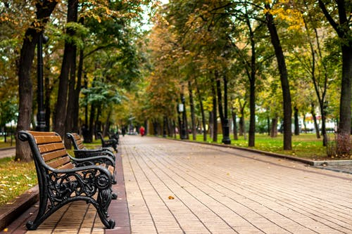 Free stock photo of autumn, background, beautiful, bench