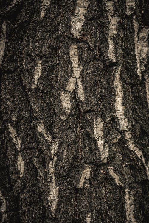 Free stock photo of abstract, background, bark, beauty