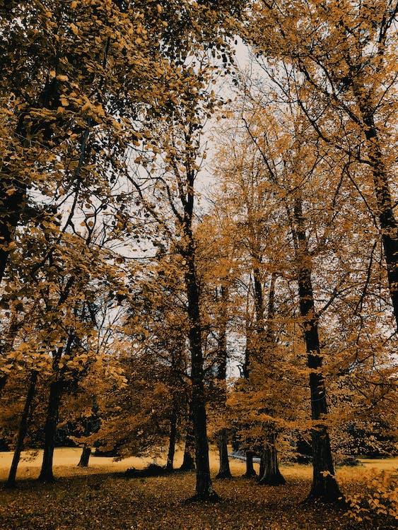 가을, 가을 색, 가지