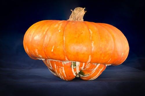 Gratis stockfoto met 31 oktober, achtergrond, amerikaanse feestdag, biologisch