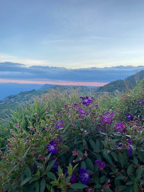 คลังภาพถ่ายฟรี ของ การท่องเที่ยว, ดอกไม้สวย, ตะวันลับฟ้า, ท้องฟ้ายามพระอาทิตย์ตก