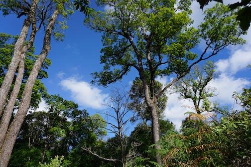 คลังภาพถ่ายฟรี ของ ความงามของธรรมชาติ, ป่า