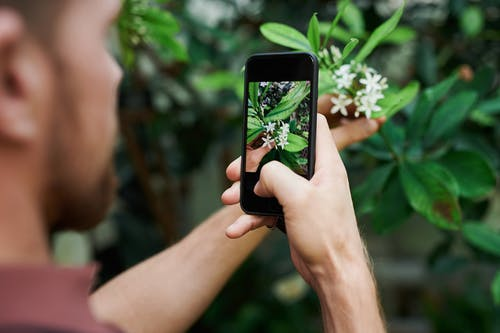 Person Taking Photo of White Petaled Flowers