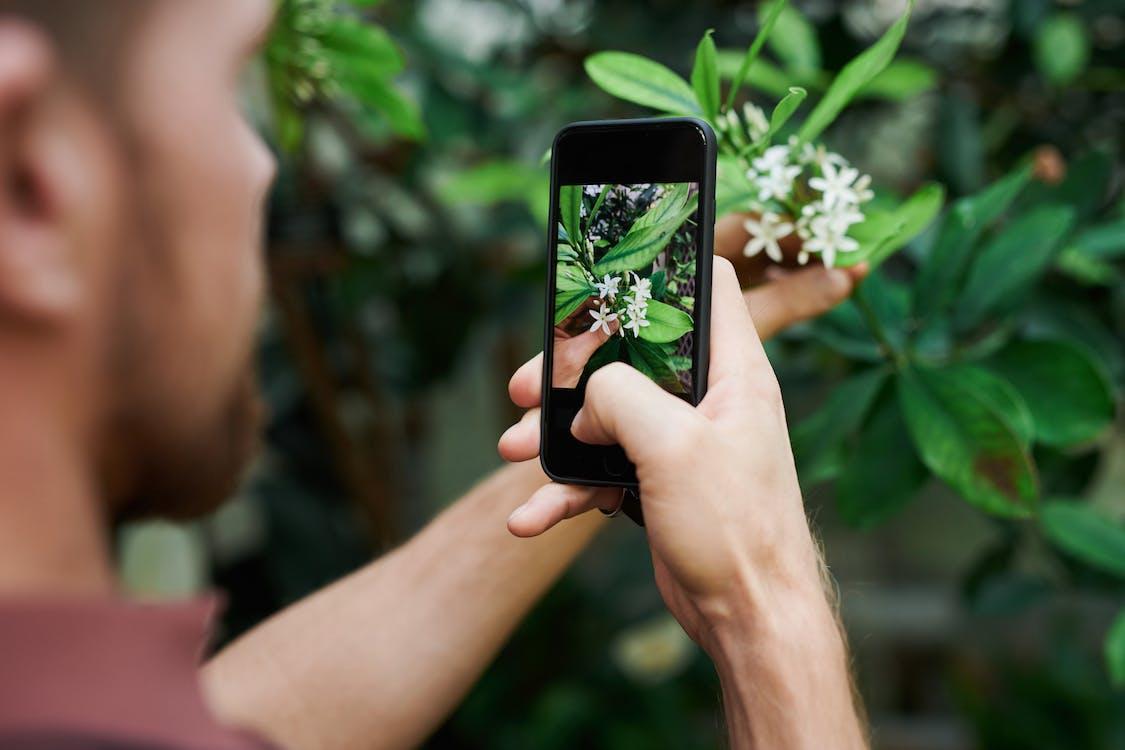 smartphone, ανθοφόρα φυτά, άνθρωπος