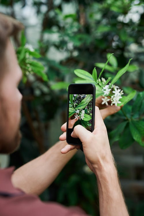 Man Taking A Photo Of Flower