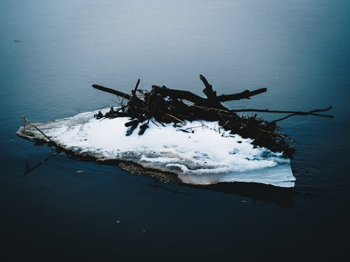 Free stock photo of branches, global warming, ice, iceberg