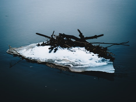 Free stock photo of iceberg, nature, water, branches