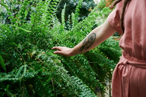 Photo of Person Touching Green Leaves