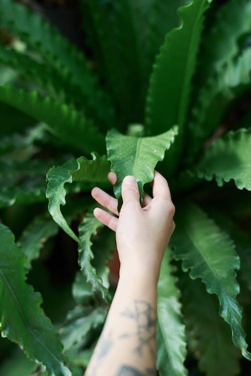 Photos gratuites de centrale, doigts, émouvant, feuilles
