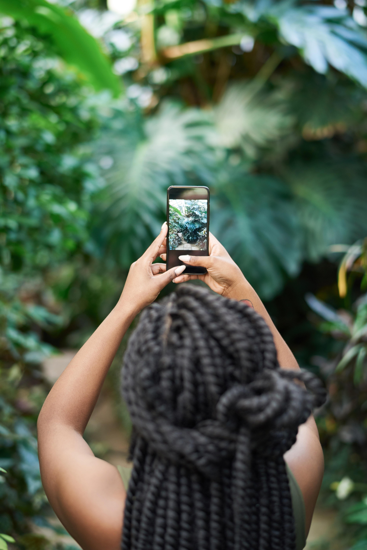 kostenloses foto zum thema blätter festhalten foto machen