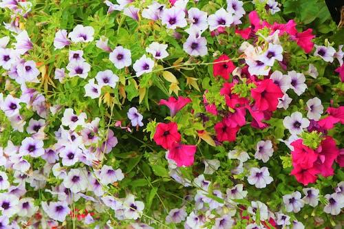 คลังภาพถ่ายฟรี ของ ขาว, ดอกไม้, ธรรมชาติ, ภูมิทัศน์