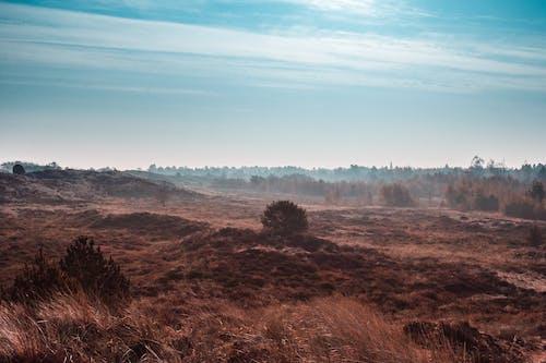 丹麥, 森林, 秋天 的 免费素材照片