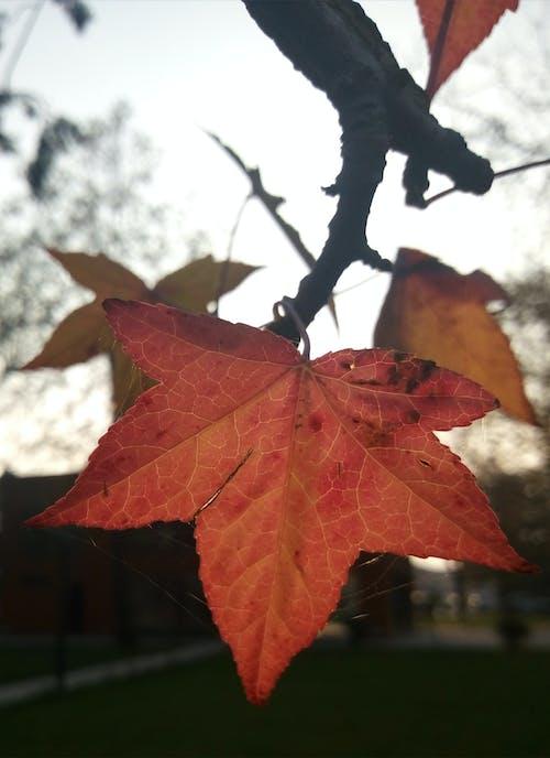 가을, 가을의, 나뭇잎, 날의 무료 스톡 사진