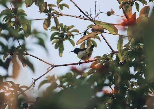 Ingyenes stockfotó állat, madár, madár a fán, madár absztrakt témában