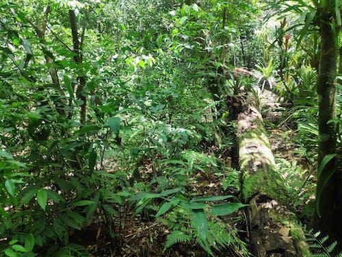 Free stock photo of forest, iguazu