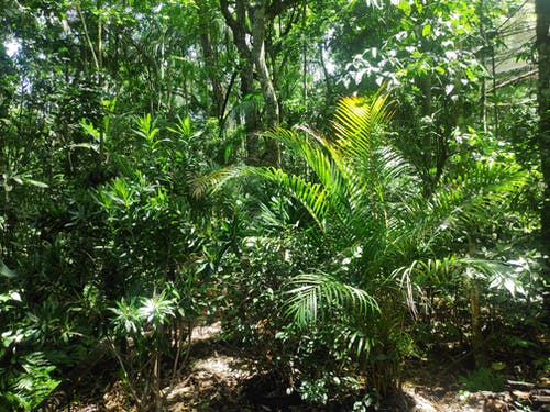 Free stock photo of forest, iguazu, plants