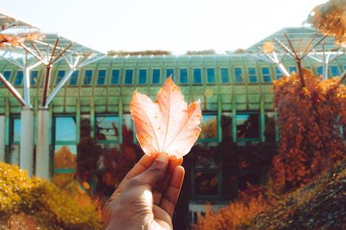 Бесплатное стоковое фото с варшава, золотое солнце, настроение, осенние листья