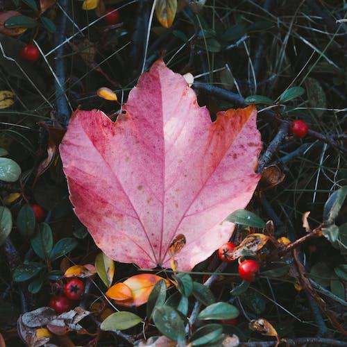 Бесплатное стоковое фото с настроение, осенние листья, Осенние украшения, Осенний лес настроение