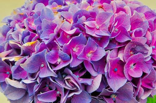 Foto stok gratis biru, bunga, bunga yang indah, ungu