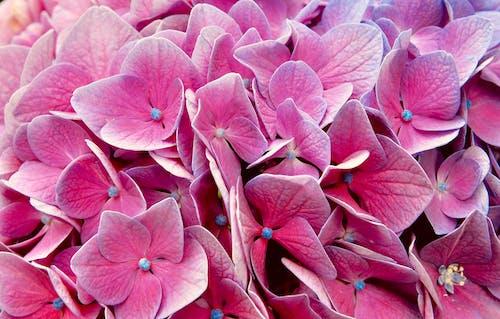 Foto stok gratis berwarna merah muda, bunga, bunga yang indah