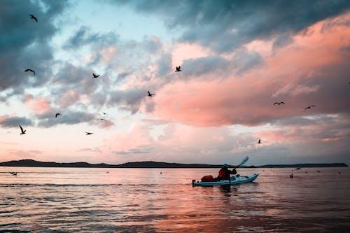 Free stock photo of birds, kayak, kayaking, pacific northwest