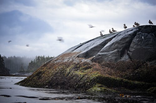 Free stock photo of birds, by the sea, cloudy skies, rocky shore