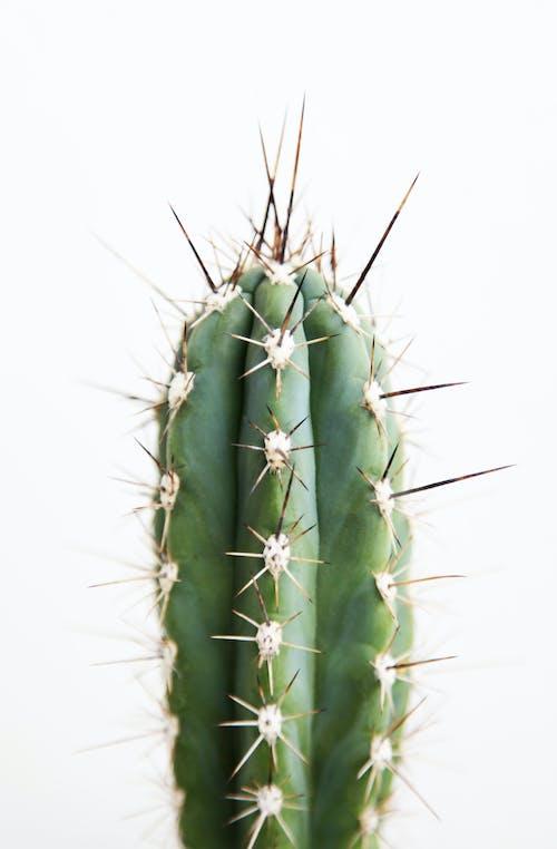 Kostenloses Stock Foto zu botanisch, cactuses, deutschland, dornen