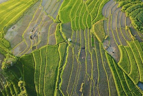 alan, Asya, drone çekimi, ekili arazi içeren Ücretsiz stok fotoğraf