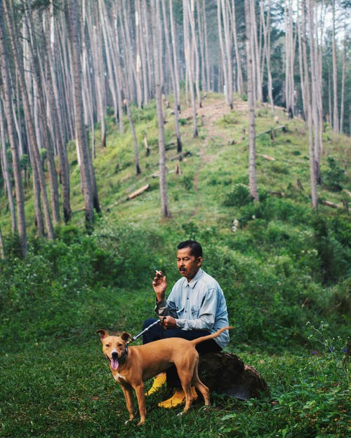 Man Sitting With A Dog Sitting On A Rock In The Woods