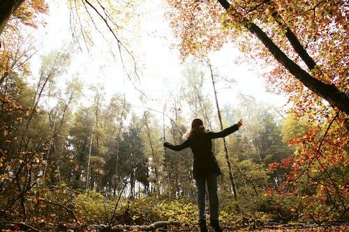 Photos gratuites de #l'automne, arbres, arbres d'automne, dans la foret