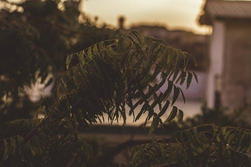 Gratis lagerfoto af 4k-baggrund, dybde, farve, fokus