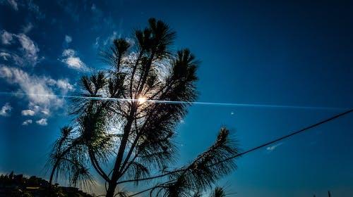 Free stock photo of bluesky, sunray, tree